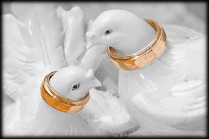 Организация свадебных торжеств: как лучше провести свадьбы?