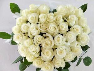 Белая роза – символ любви