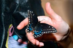 Салют из бабочек - романтичное и прекрасное на вашем торжестве!
