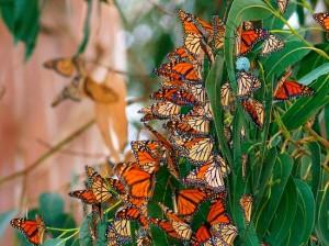 Салют из бабочек- то, что нужно для незавываемой свадьбы!