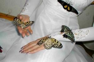 Салют из бабочек: то, что нужно для незабываемой свадьбы!