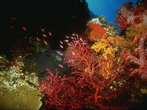 кораллы в море
