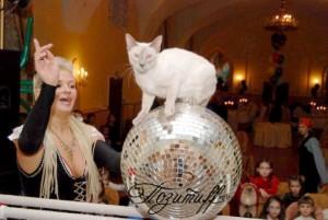 шоу дрессированных животных на свадьбу
